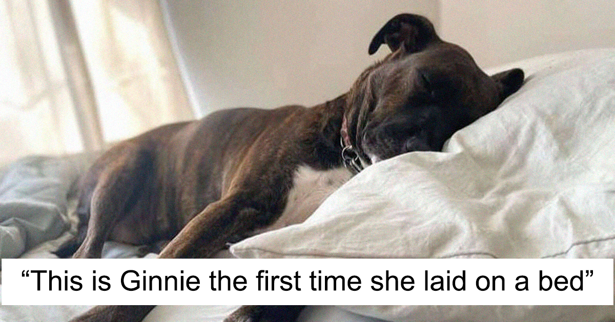 Woman Adopts A Dog That Has Never Known A Soft Bed Or Toys And Gives Her A Family